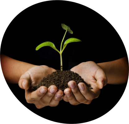 Close-up shot of hands holding soil with a sprout on it